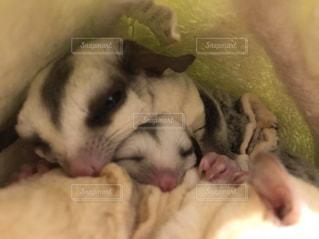 ママとお昼寝中の写真・画像素材[982187]