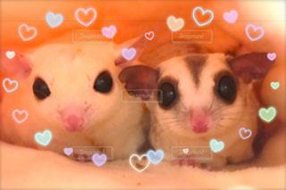 いい夫婦の写真・画像素材[982191]