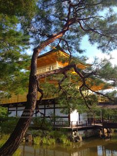 京都 金閣寺の写真・画像素材[770355]