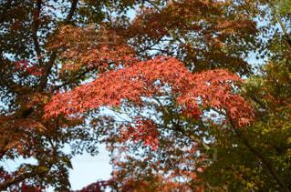 近くの木のアップの写真・画像素材[863882]