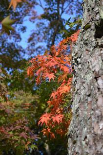 近くの木のアップの写真・画像素材[863883]