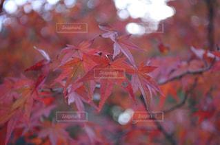 近くの木のアップ - No.891491