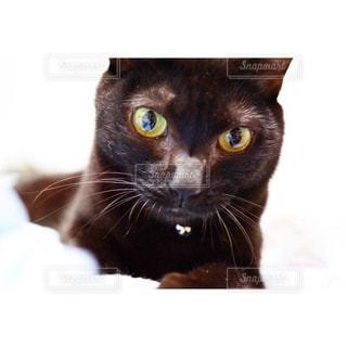 カメラを見ている猫の写真・画像素材[770452]