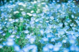 青い絨毯の写真・画像素材[2137379]