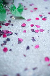 花びら散るの写真・画像素材[2271961]