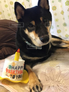 ベッドの上で横になっている茶色と黒犬の写真・画像素材[770559]