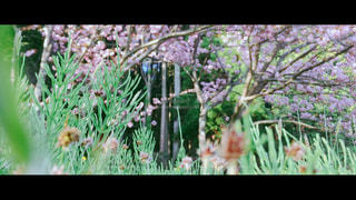 春の昼寝の写真・画像素材[1177270]