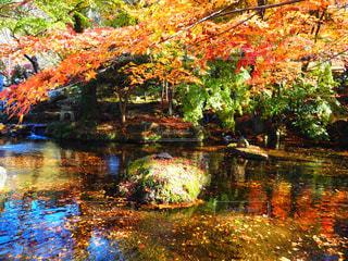 岐阜公園の池の写真・画像素材[1614475]