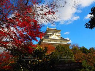 秋の岐阜城の写真・画像素材[1614476]
