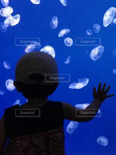 暗闇で光るクラゲの写真・画像素材[770715]