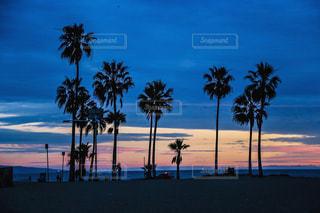 ヤシの木とビーチの写真・画像素材[770865]