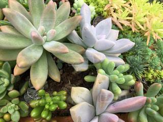 植物アップの写真・画像素材[780304]