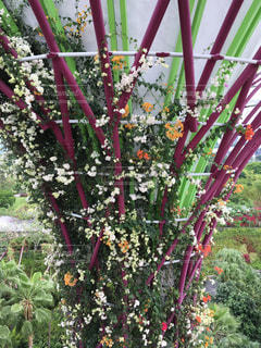 ガーデンバイザベイの花たち - No.809566