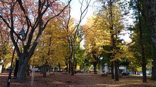 ツリーの横にある空の公園ベンチ - No.796934