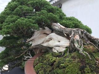 近くの木の横にある岩をの写真・画像素材[771759]