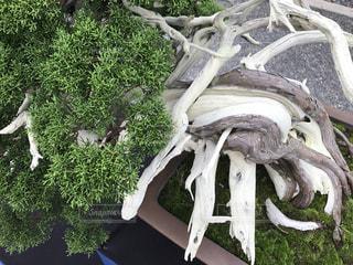木の像の写真・画像素材[771760]