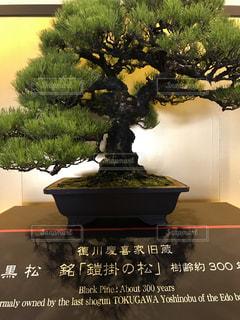 木の花の花瓶の写真・画像素材[771763]