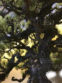 フォレスト内のツリーの写真・画像素材[771765]