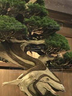 近くの木のアップの写真・画像素材[771767]
