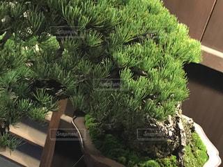庭園の緑の植物の写真・画像素材[771768]