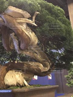 恐竜の像の写真・画像素材[771772]