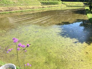 近くに池のアップ - No.771850