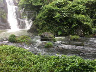 木々 に囲まれた滝の写真・画像素材[771864]