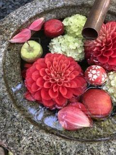 カラフルな花のグループの写真・画像素材[3603637]