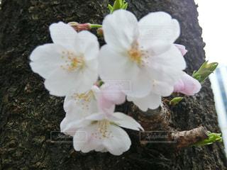 植物の白い花 - No.772938