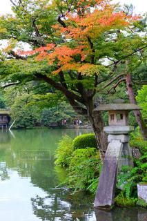 日本の庭園の写真・画像素材[772419]