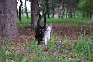 寄り添う猫の写真・画像素材[774590]