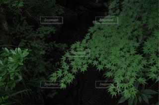 紅葉のある小川の写真・画像素材[1446948]