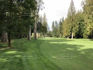 緑豊かな緑のフィールドの真ん中の木の写真・画像素材[784330]