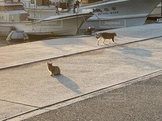 海辺の猫の写真・画像素材[4153961]