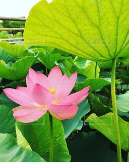 近くの緑の植物をの写真・画像素材[800970]