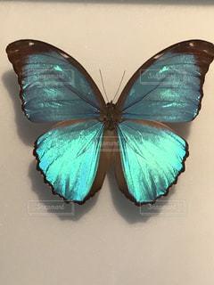 蝶々🦋表面が緑色の蛍光色の写真・画像素材[773320]