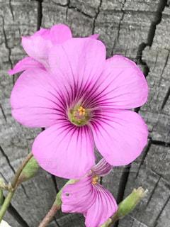 ピンクの花の写真・画像素材[773612]