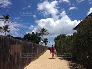 ラニカイビーチに続く小道の写真・画像素材[773856]