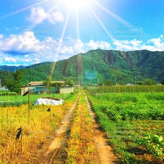 1人で歩く夏の田舎道 - No.773348