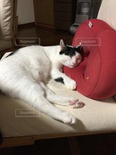 ベッドの上に座っている猫の写真・画像素材[786799]