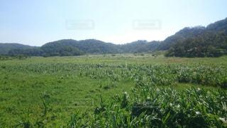 台湾南部の湿地帯の写真・画像素材[773567]