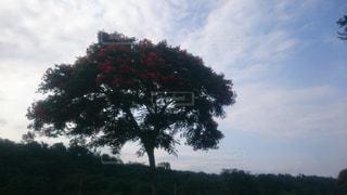 大きな木 - No.773751