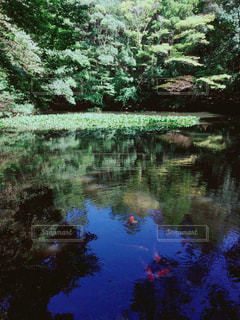 グラデーションな池 - No.781914