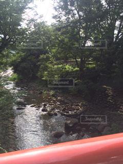 森を流れる川の写真・画像素材[782081]