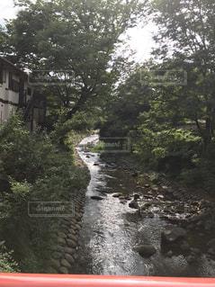 森を流れる川の写真・画像素材[782086]