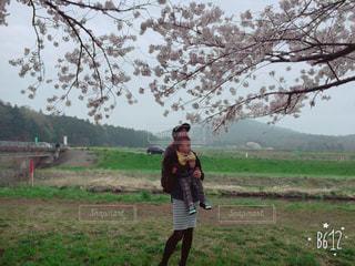 桜道の写真・画像素材[780733]