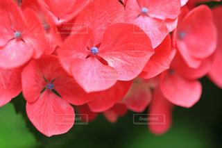 近くの花のアップの写真・画像素材[774154]