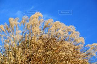近くの植物のアップの写真・画像素材[780549]