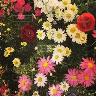 街角の花壇が花畑の写真・画像素材[812300]