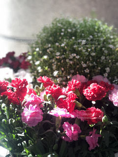 公園の施設内にあった花壇の花の写真・画像素材[2181893]